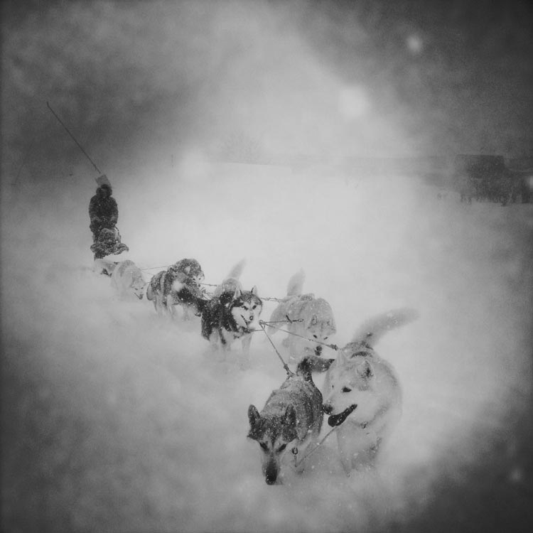 chiens de traineau et nuit en igloo